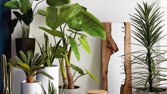 Botanical Bonaza