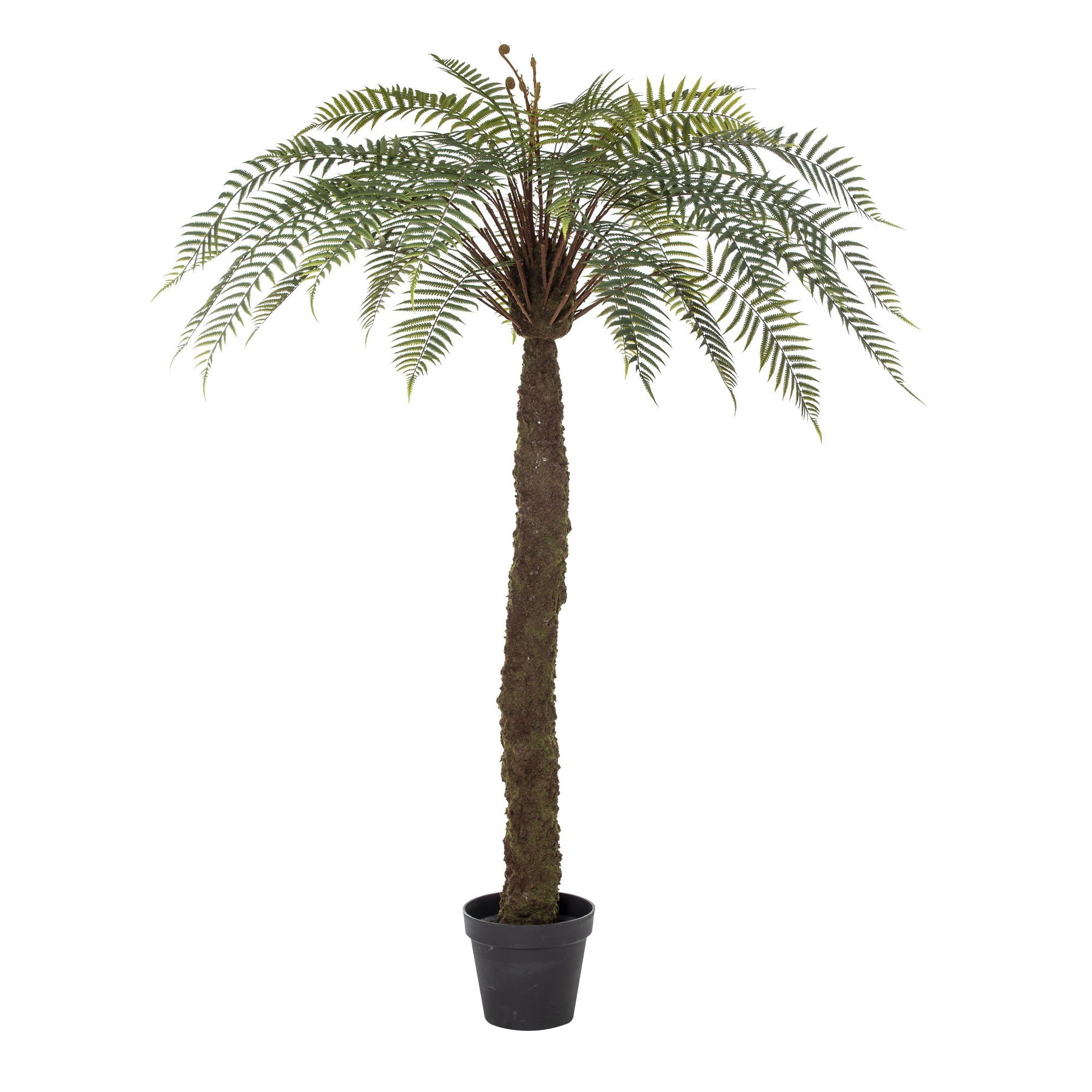 Potted Artificial Sword Fern, 183cm