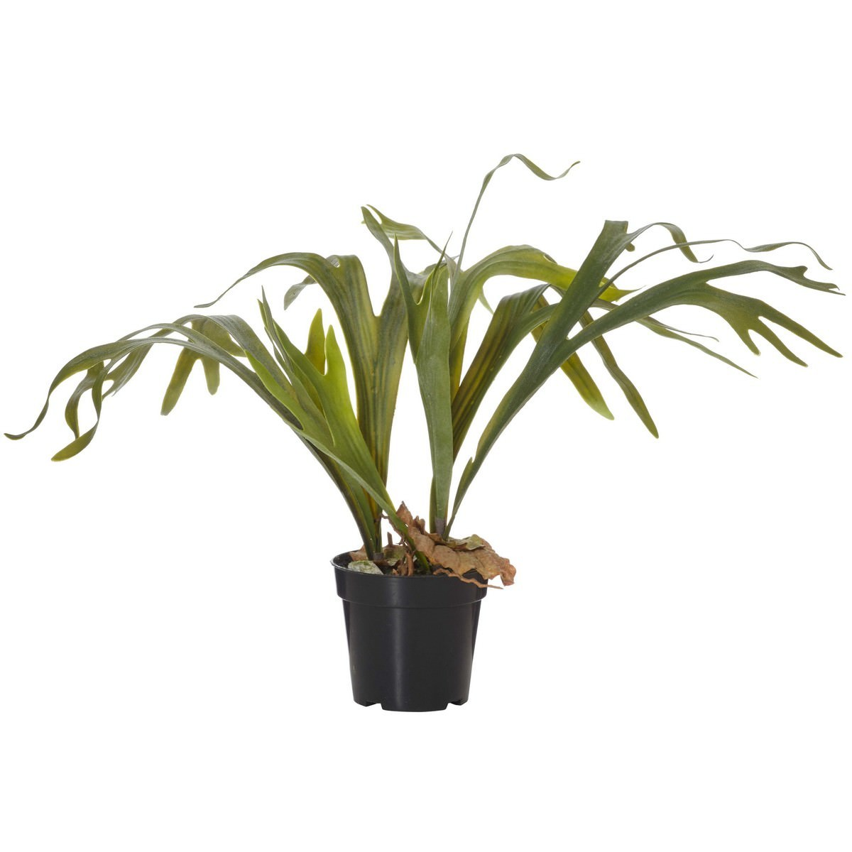 Potted Artificial Staghorn Fern, 55cm