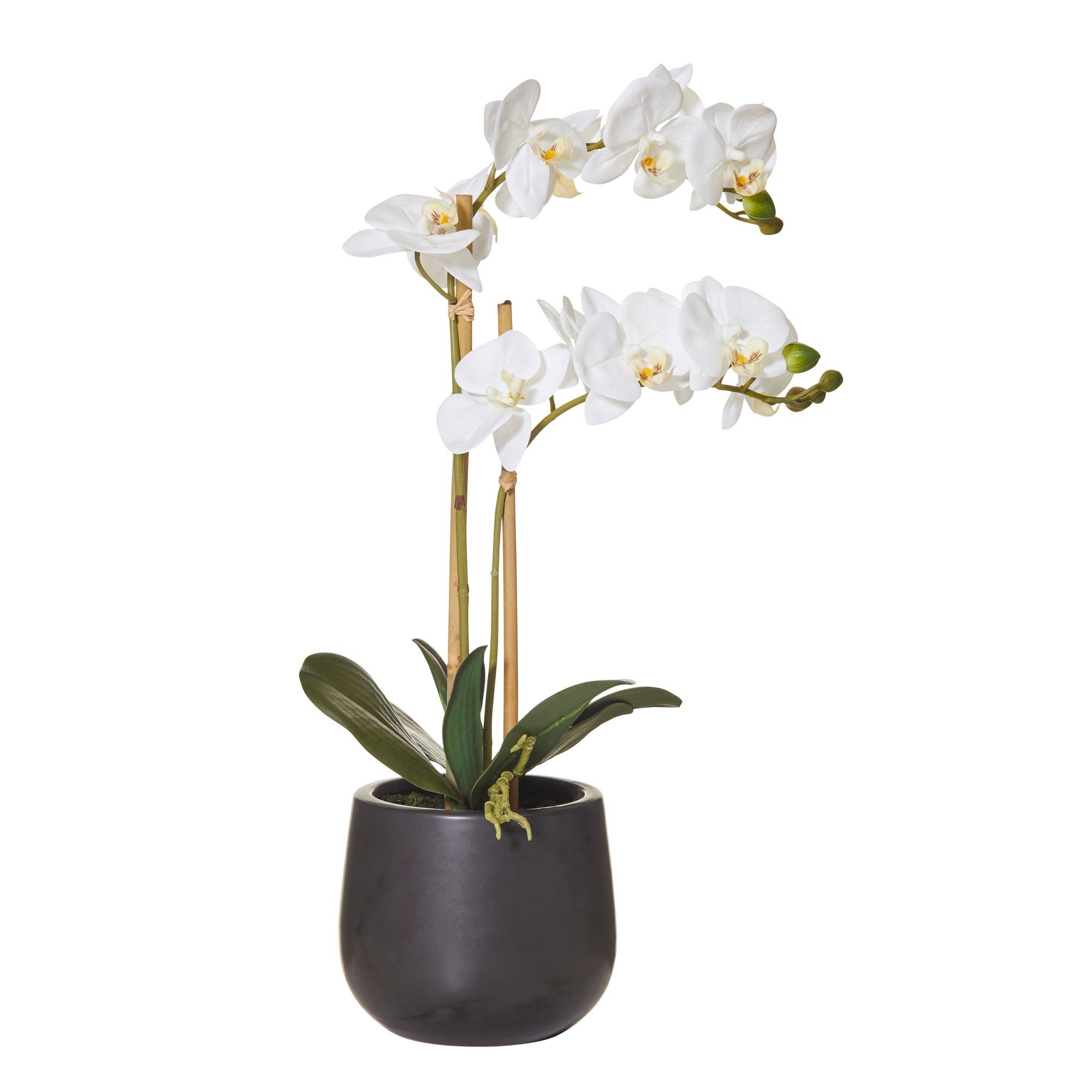 Artificial Butterfly Orchid in Smooth Pot, 56cm
