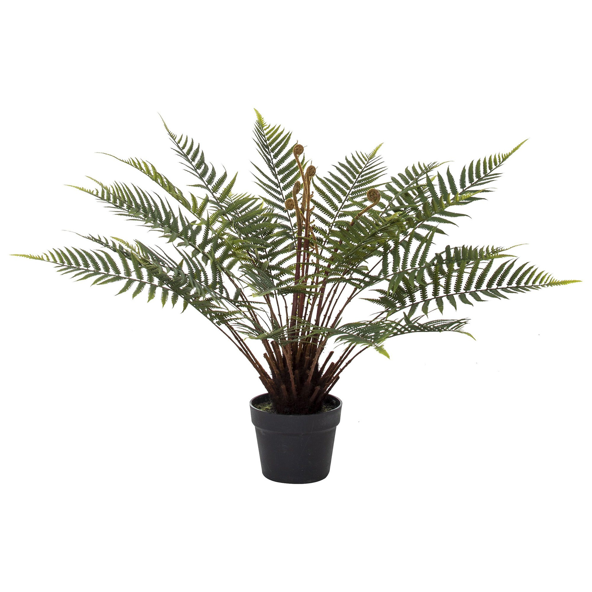 Potted Artificial Sword Fern, 66cm