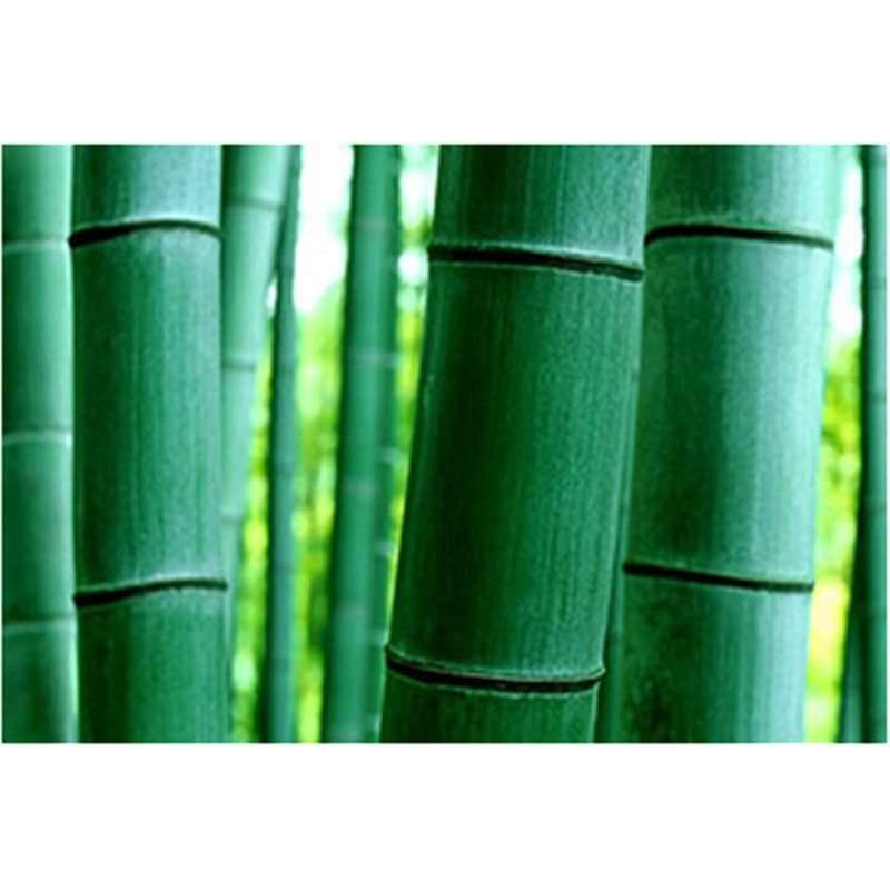 Bamboo green - Hand Painted - 120x100cm
