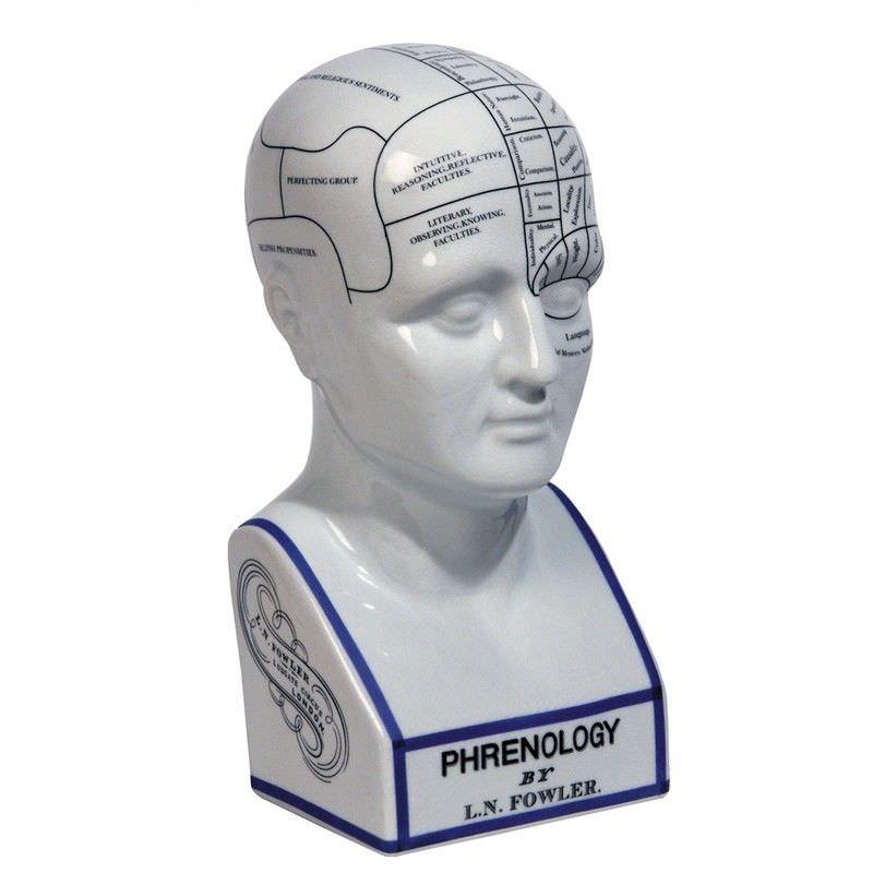 Porcelain Phrenology Head Bust