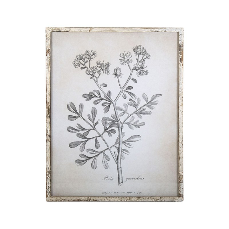 Anis Framed Botanical Illustration Wall Art Print, Ruta Graveolens, 54cm