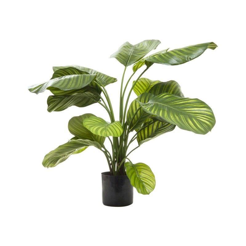 Artificial Calathea Fasciata, 65cm, Green