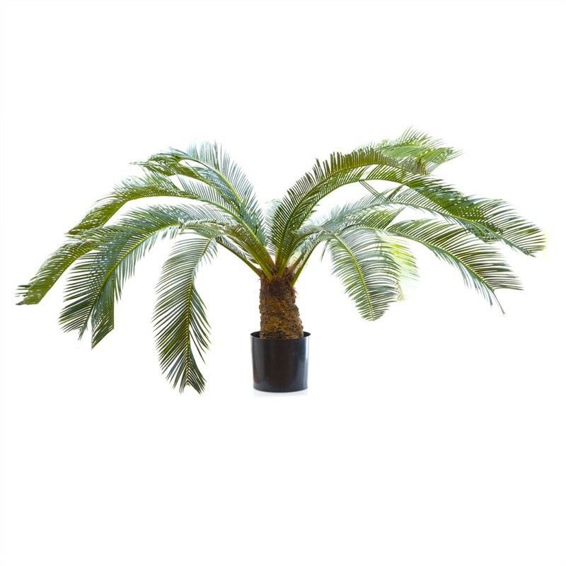 100cm Cycus Palm with 15 Fronds