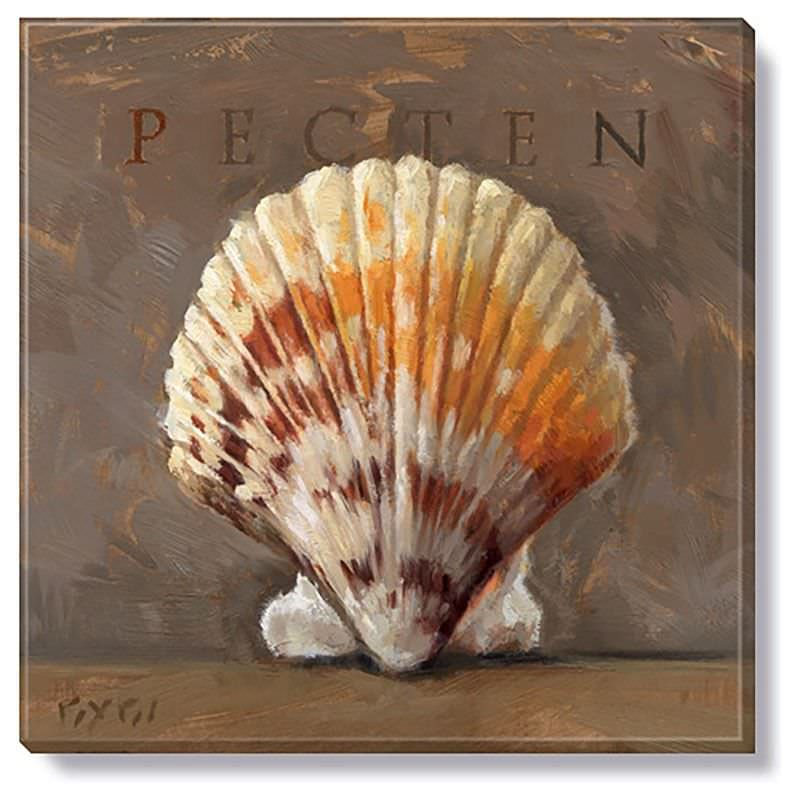 Bayport Stretched Canvas Wall Art Print, Pecten, Small