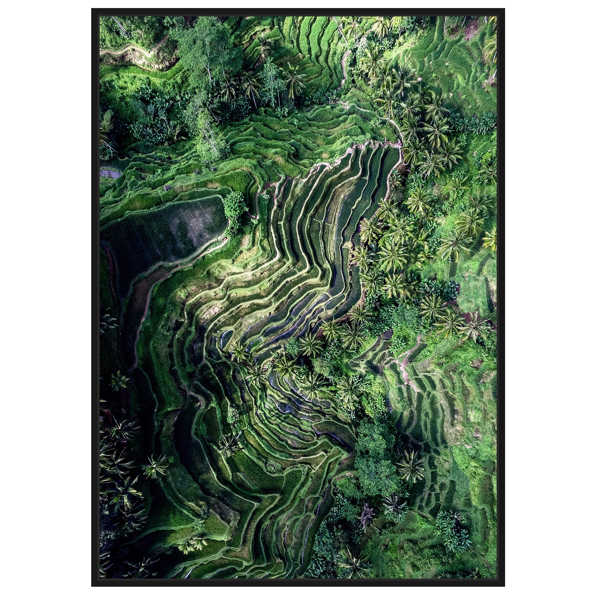 Aerial Rice Field Framed Wall Art Print, No.2, 120cm