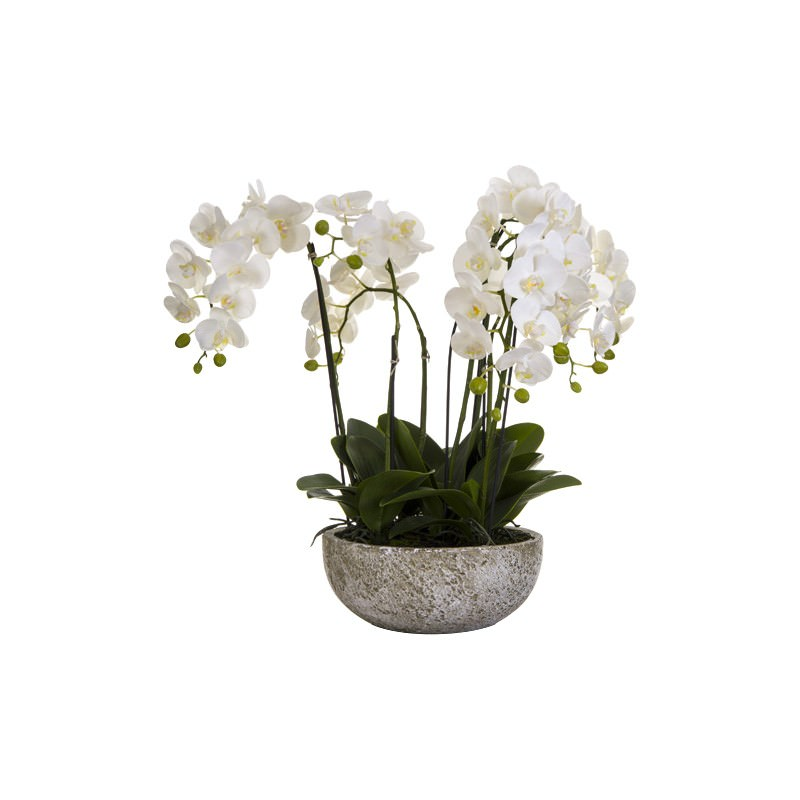 Alivia Artificial Orchid Flower in Clay Pot