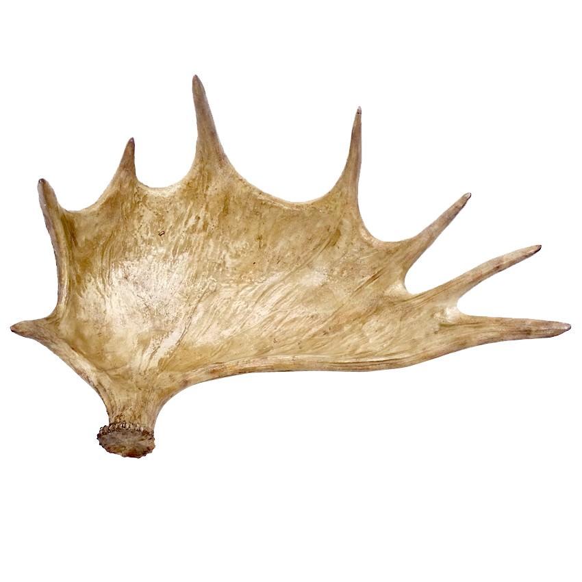 Sculptured Elk Horn Decor Bowl