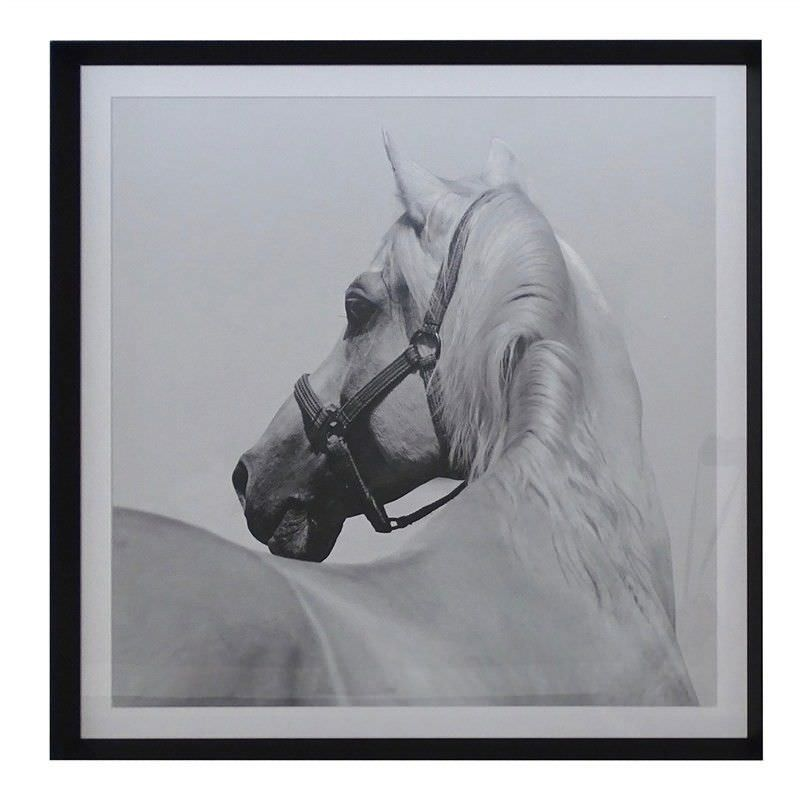 Horse Whisper Aluminium Framed Wall Art