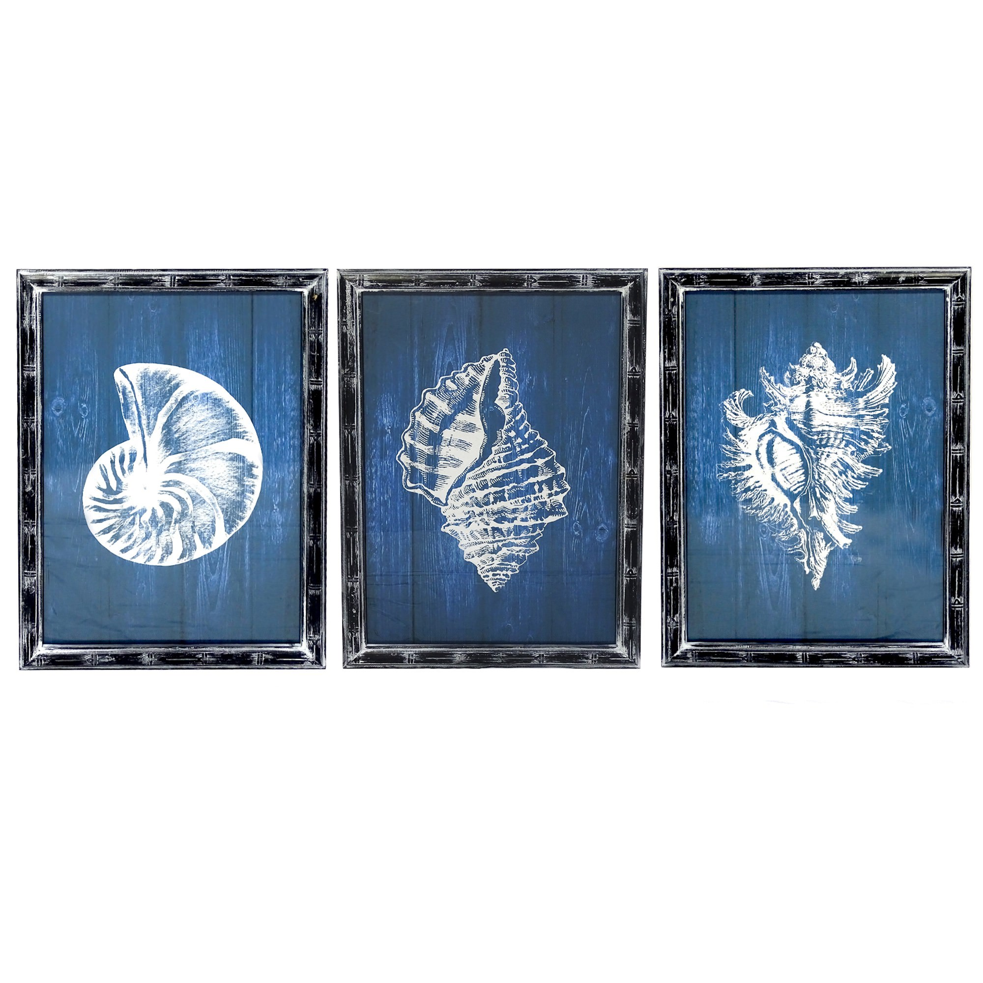 Shells Blue 3 Piece Assorted Wall Art Print Set, 70cm