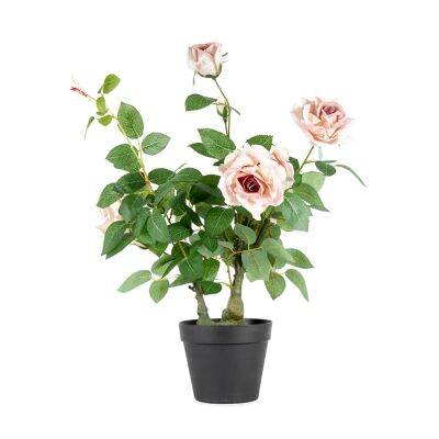 Potted Artificial Lagerfeld Rose, 65cm