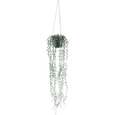 Hanging Potted String of Beads, 78cm