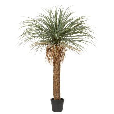 Potted Artificial Grass Tree, 183cm