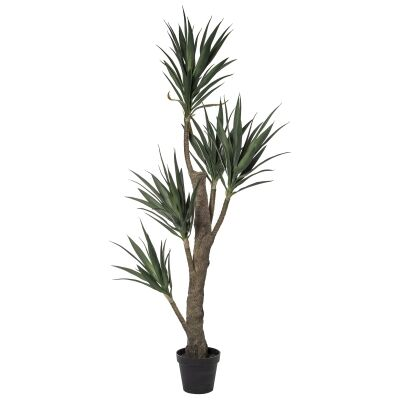 Potted Artificial Dragon Tree, 198cm