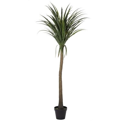 Potted Artificial Yucca Tree, 182cm