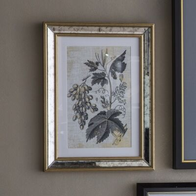 Braun Botanical Studies Set of 2 Framed Wall Arts