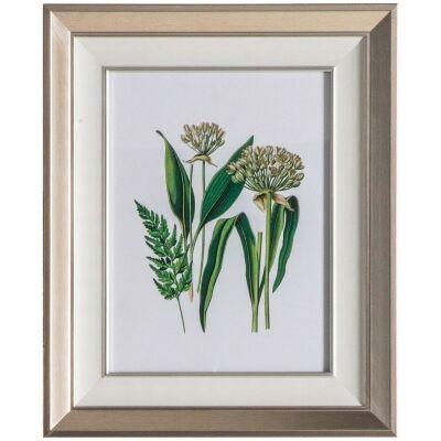 Set of 2 Botanical Spring I Framed Wall Art Prints, 55cm