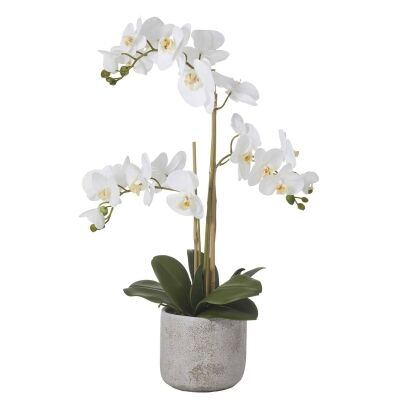 Artificial Butterfly Orchid in Charcoal Pot