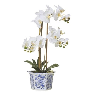 Artificial Butterfly Orchid in Chinoiserie Pot