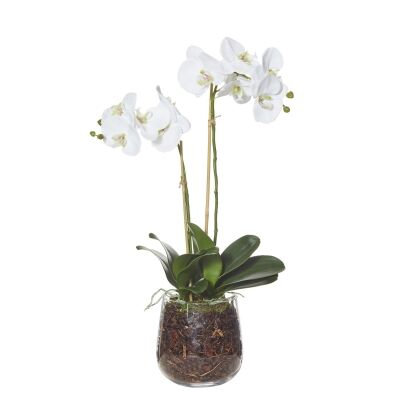 Artificial Phalaenopsis Orchid Plant in Greta Vase