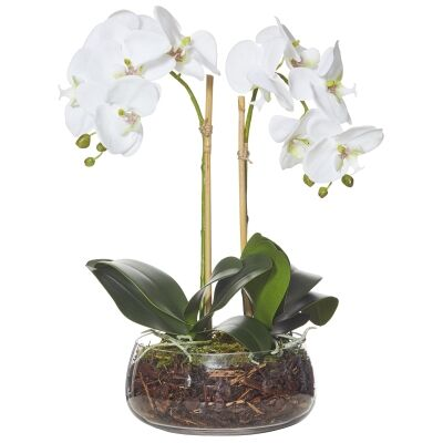 Artificial Phalaenopsis in Billie Rounded Bowl