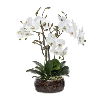 Artificial Phalaenopsis Orchid in Scar Bowl Vase, Small