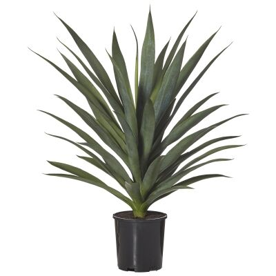 Potted Artificial Yukka, 68cm