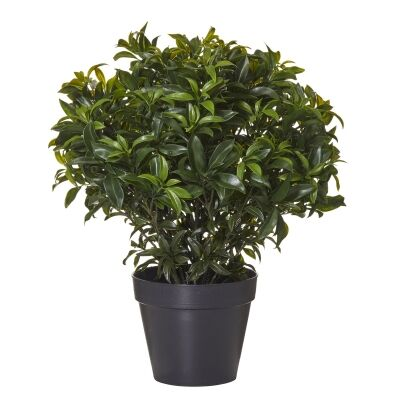 Potted Artificial Sweetbay Bush, 60cm