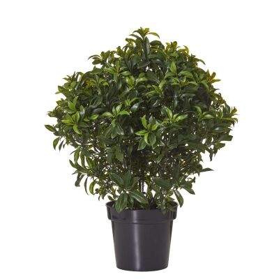 Potted Artificial Sweetbay Bush, 76cm