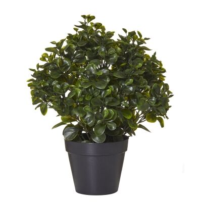 Potted Artificial Peperomia Bush, 58cm
