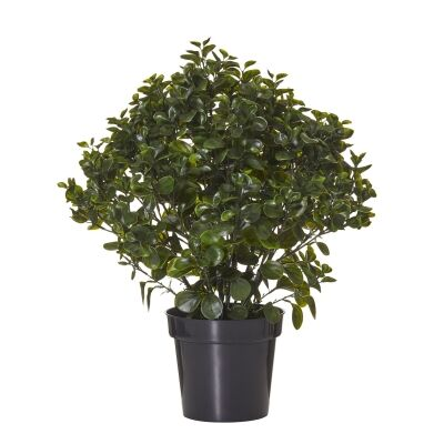 Potted Artificial Peperomia Bush, 72cm