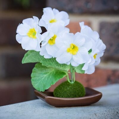 Set of 4 Artificial Table Poppy - White