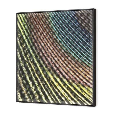Magivision Framed 3D Wall Art, Peacock Plume, 80cm