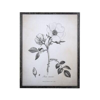 Anis Framed Botanical Illustration Wall Art Print, Rosa Canina, 54cm