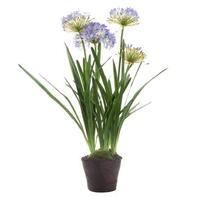 Artificial Agapanthus in Pot