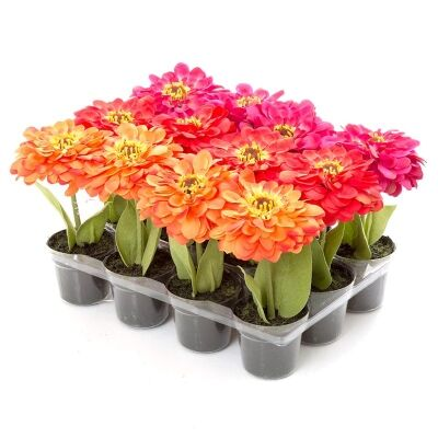 Tray of 12 Potted Artificial Zinnias