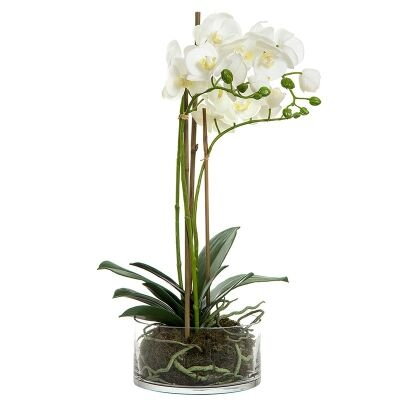 Artificial Orchid in Round Glass Vase, White