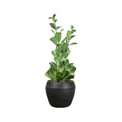 Artificial Green Plant in Concrete Pot, 58cm