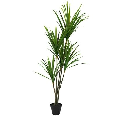 Set of 2 Artificial Dracena in Pot