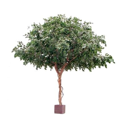 Potted Artificial Ficus Exotica Tree, 300cm