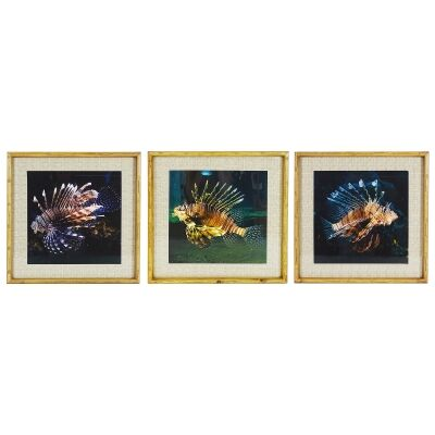 Chavez 3 Piece Bamboo Framed Wall Art Print Set, Lion Fish, 50cm