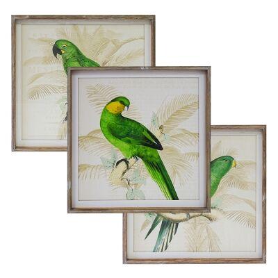 Perroquet 3 Piece Pine Timber Framed Wall Art Print Set, 60cm