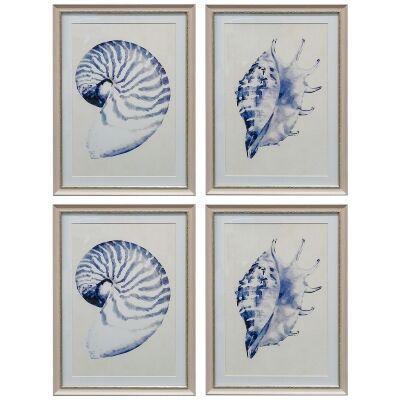 Beach Shells 4 Piece Assorted Framed Wall Art Set, 55cm