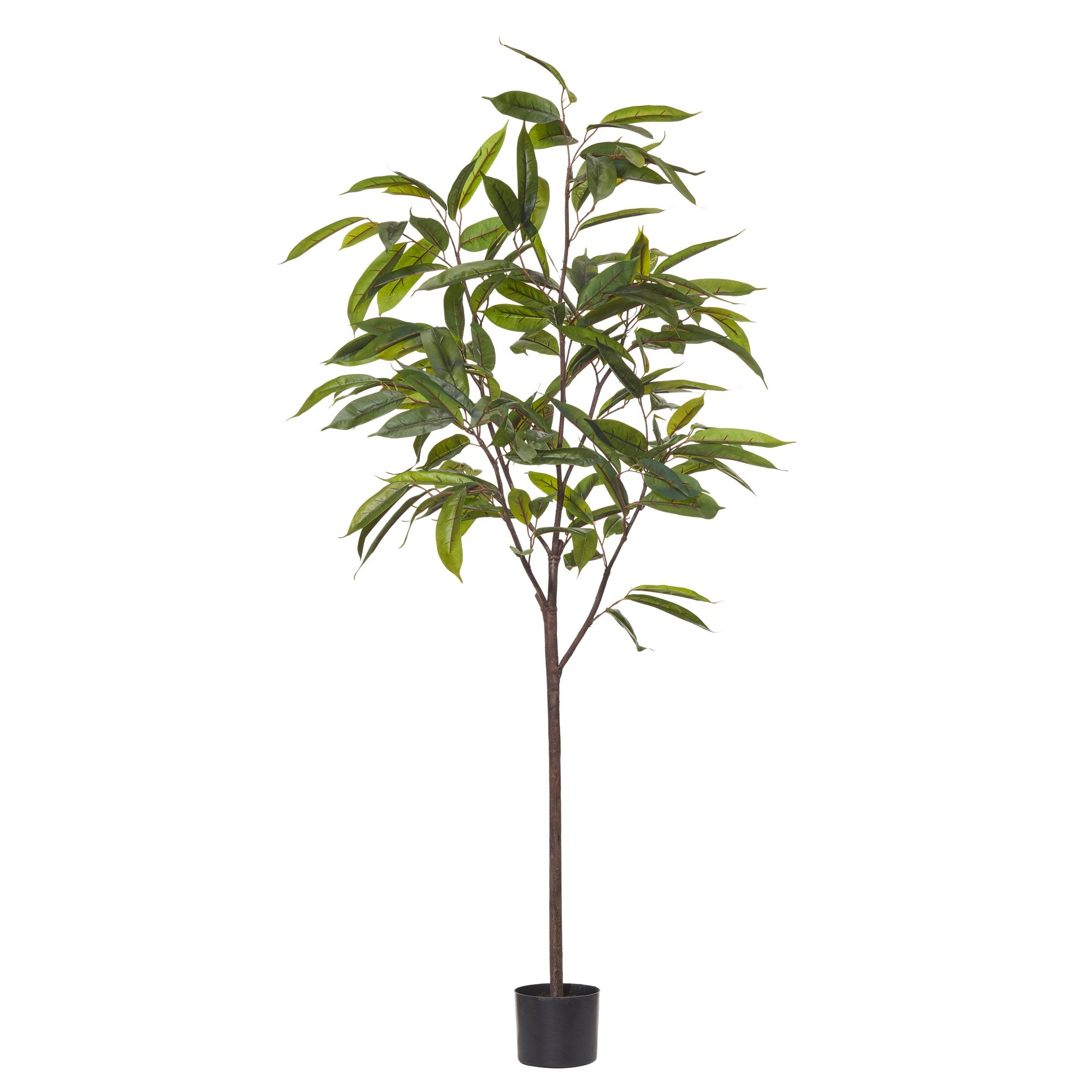 Potted Artificial Ficus Alli Tree, 180cm