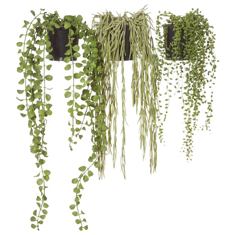 3 Piece Assorted Potted Artificial String of Pearls, Angel Vine, Hoya Set