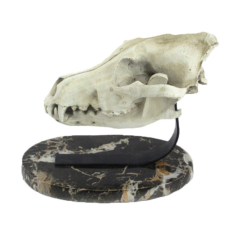 Dinosaur Skull Resin Decor with Marble Base