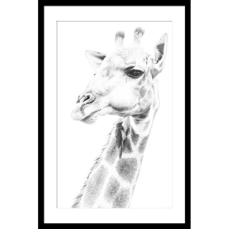 Giraffe Photography Wall Art - Small