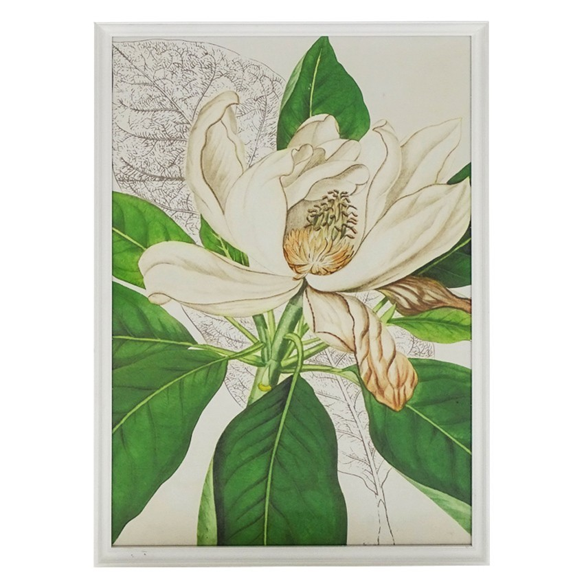 Oasis Timber Framed Wall Art Print, Magnolia Bloom, 120cm